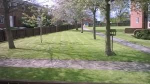 Crown Imperial Lawn Mowing