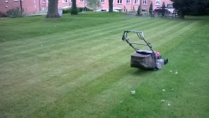 Grass Cutting - Stockton Gardener